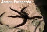 Ophiocoma echinata Photo Credit:James Fatherree