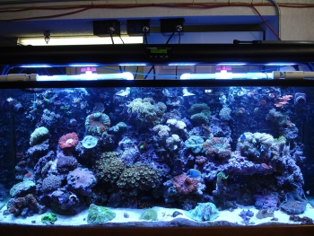 Saltcorner Article Aquascaping With Polyurethane Foams