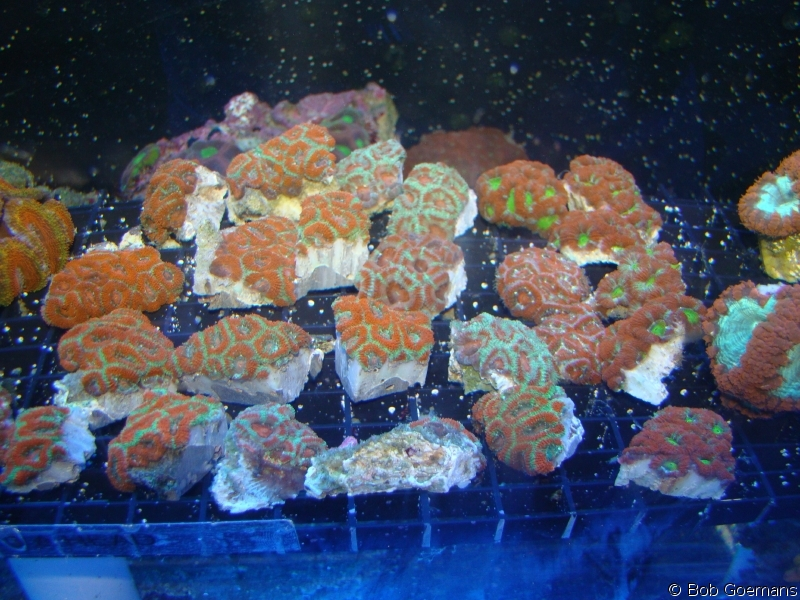 Assorted Frags