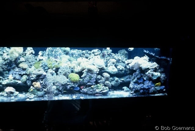 My past 320 gallon bare-bottom reef system