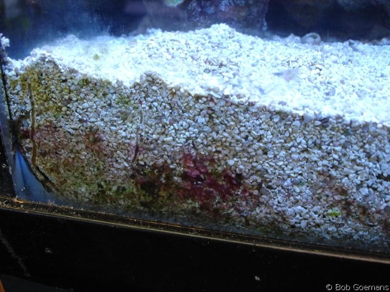 The Living Marine Aquarium Manual Chapter 8 System