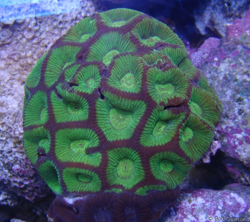 The Living Marine Aquarium Manual Chapter 16 Coral Selection By