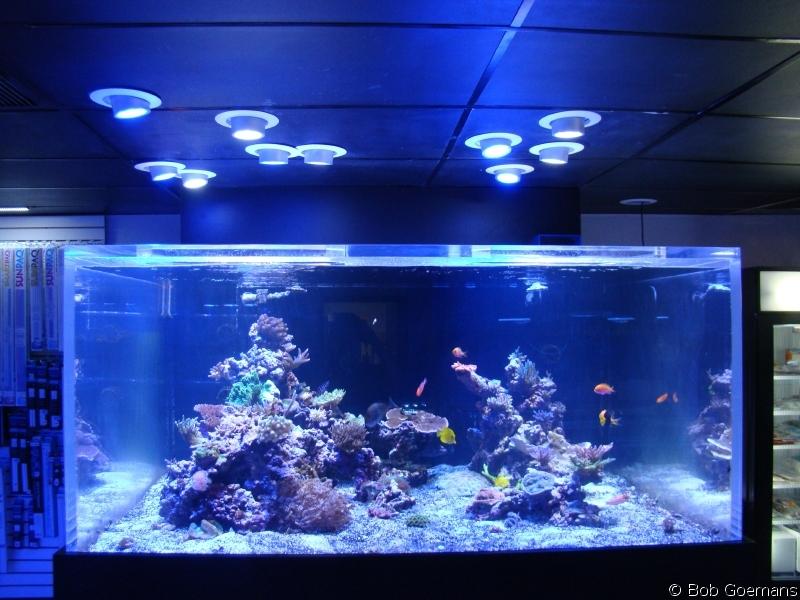 Black light fish tank the image kid has it for Square fish publishing