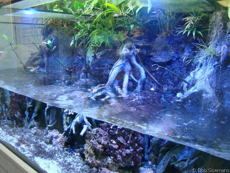 Mangrove Plants In Saltwater Aquarium saltwater paludarium - the reef ...
