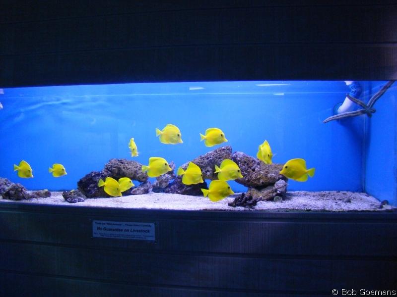 The Living Marine Aquarium Manual Chapter 14 Animal Husbandry By Bob Goemans