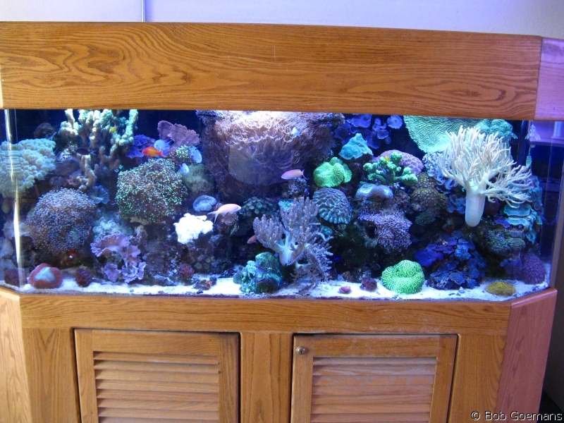 Low Profile Reef Show Aquarium