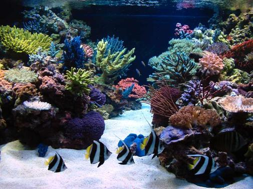Saltcorner Aquarium Photo Gallery