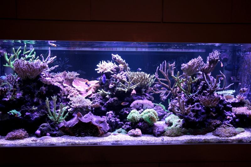 Saltcorner aquarium photo gallery for 20 gallon fish tank dimensions