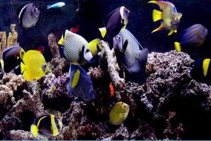 Saltcorner Aquarium Photo Gallery